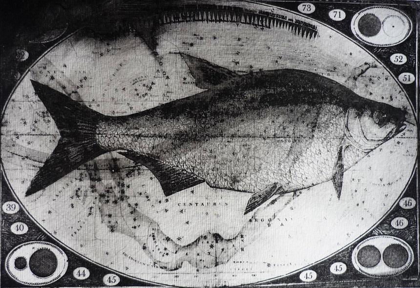 BParker Starfish etching 38x48cm 440GBP web