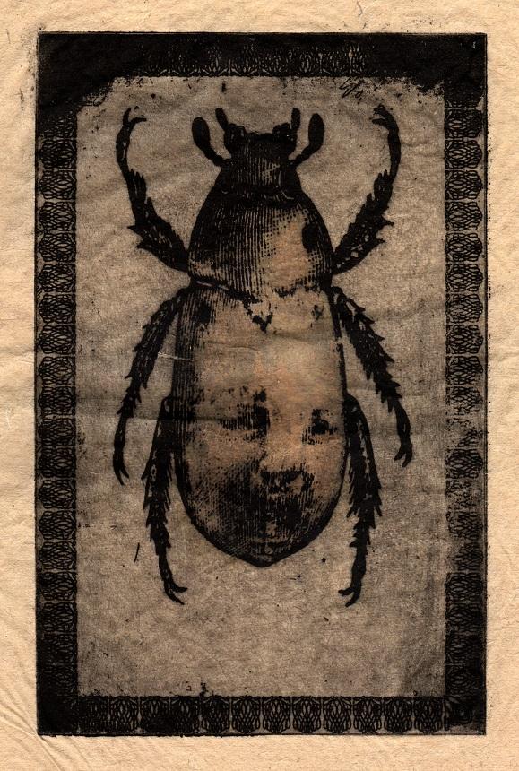 BParker Beetle